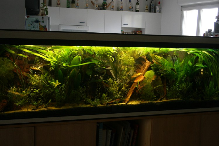 Petite pr sentation de sam for Aquarium 600l