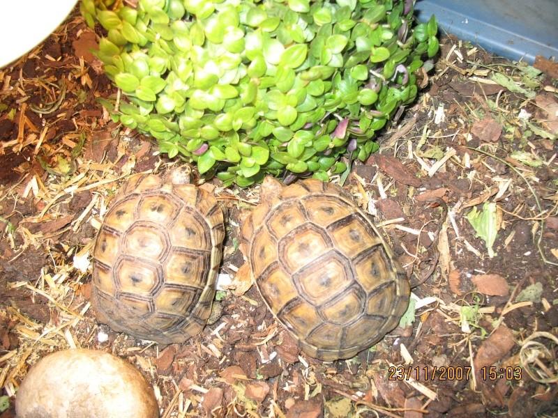 Plante ador e par les tortues for Commande plantes par correspondance