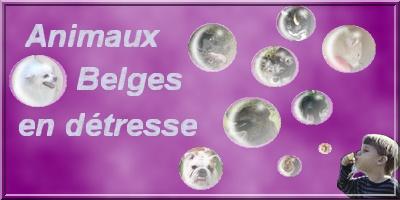 Animaux Belges en d�tresse