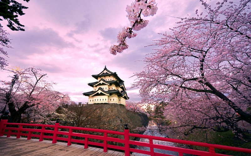 Les Cerisiers En Fleurs L Hanami Et La Symbolique De La Sakura Au