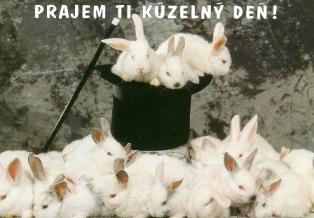 Fórum o králikoch