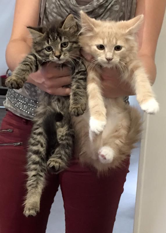 Grande diff rence de taille entre 2 chatons de 3mois - Combien de portee par an pour un chat ...