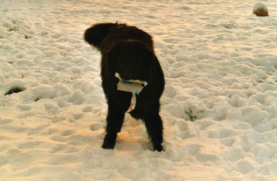 Vote concours photo autres races notre animal qui joue for Cash piscine isere