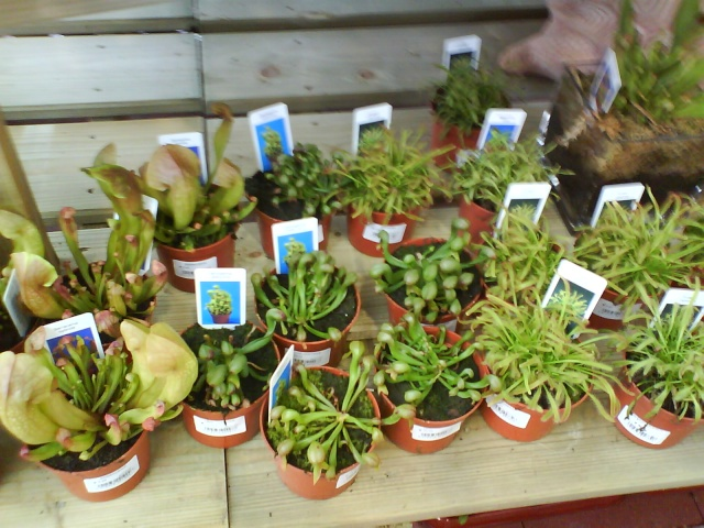 plante carnivore jardinerie