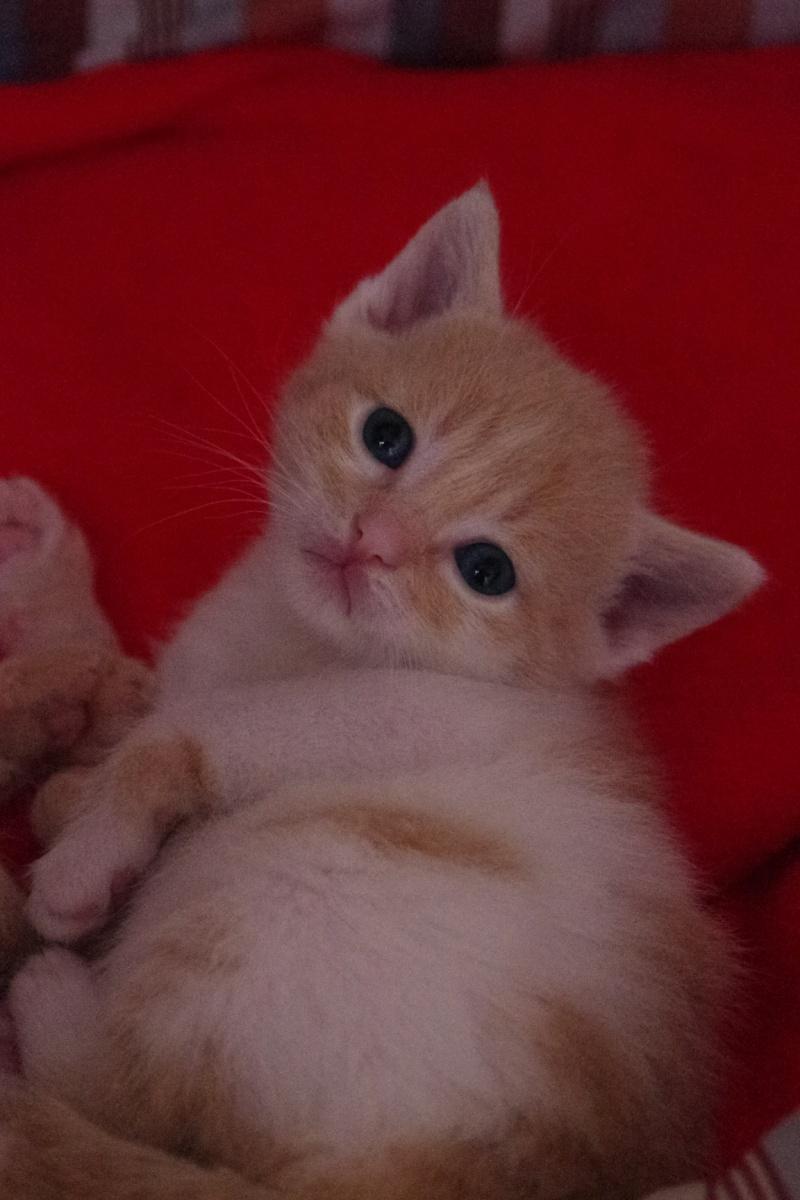 l chat