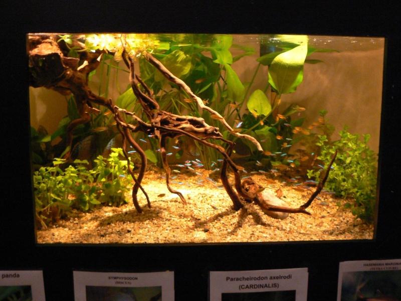 Compte rendu expo de l 39 e d a for Racine aquarium