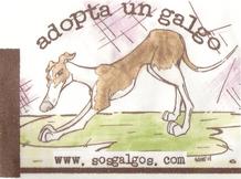 Colabora con SOS Galgos