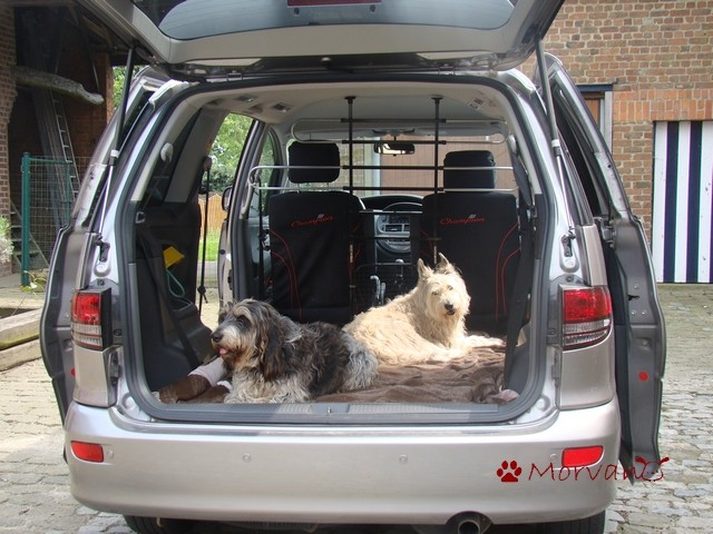 le chien en voiture page 2. Black Bedroom Furniture Sets. Home Design Ideas