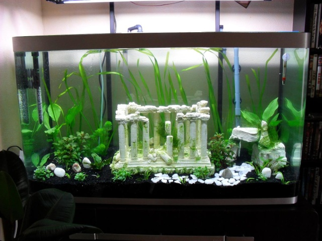 idée déco petit aquarium