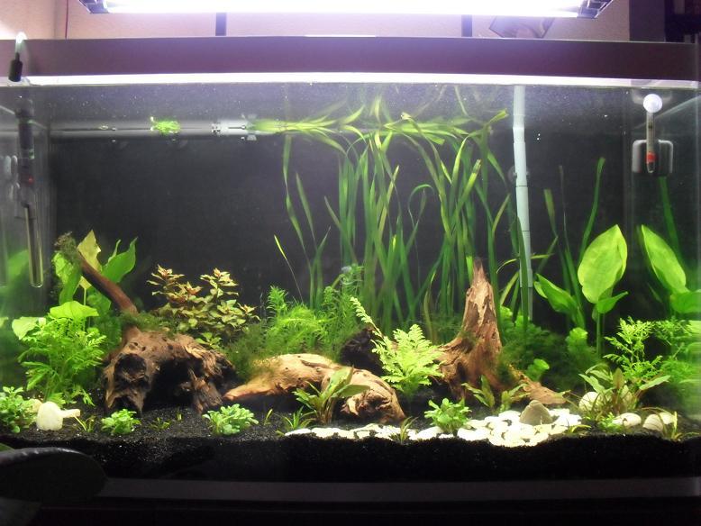 Nouvel aquarium de 260 litres conseils page 2 for Aquarium osaka 260