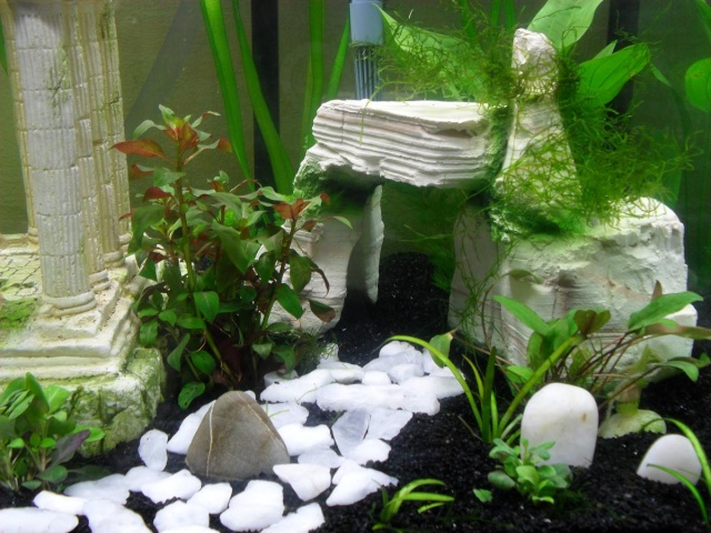 Decoration Aquarium Rocher Muraille