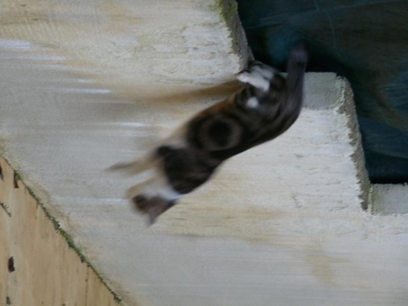 Savez vous comment repousser les chats - Comment repousser les pies ...