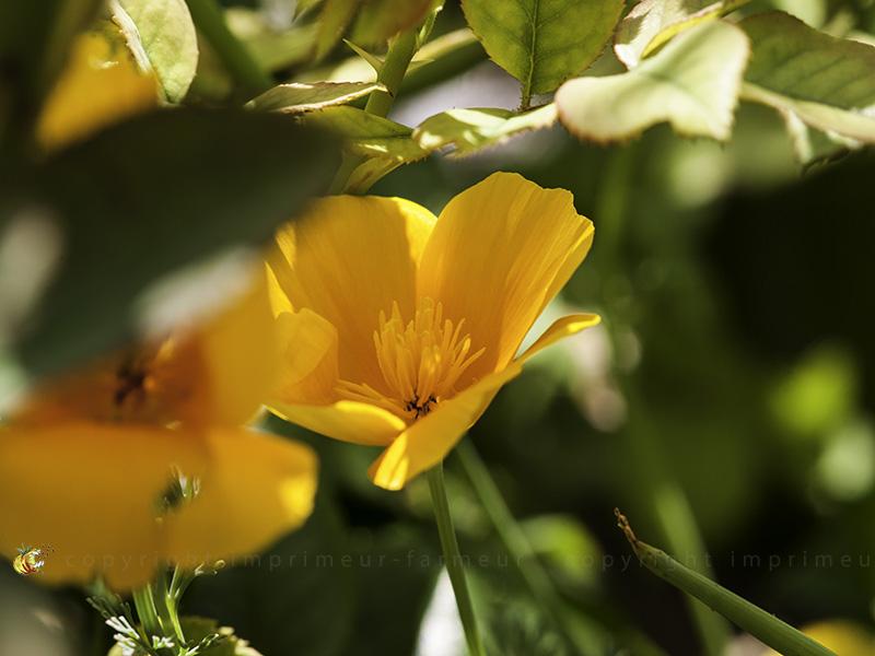 dans le jura les fleurs c 39 est toute l 39 ann e les fleurs arbres et arbustes d 39 ornement. Black Bedroom Furniture Sets. Home Design Ideas