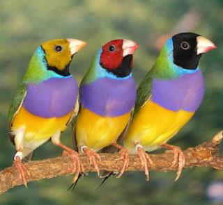 Mundo ave