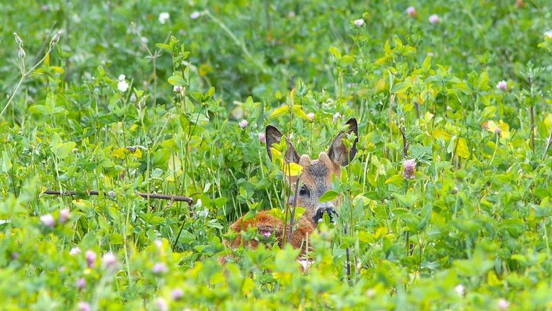 Juin en forêt de Fontainebleau