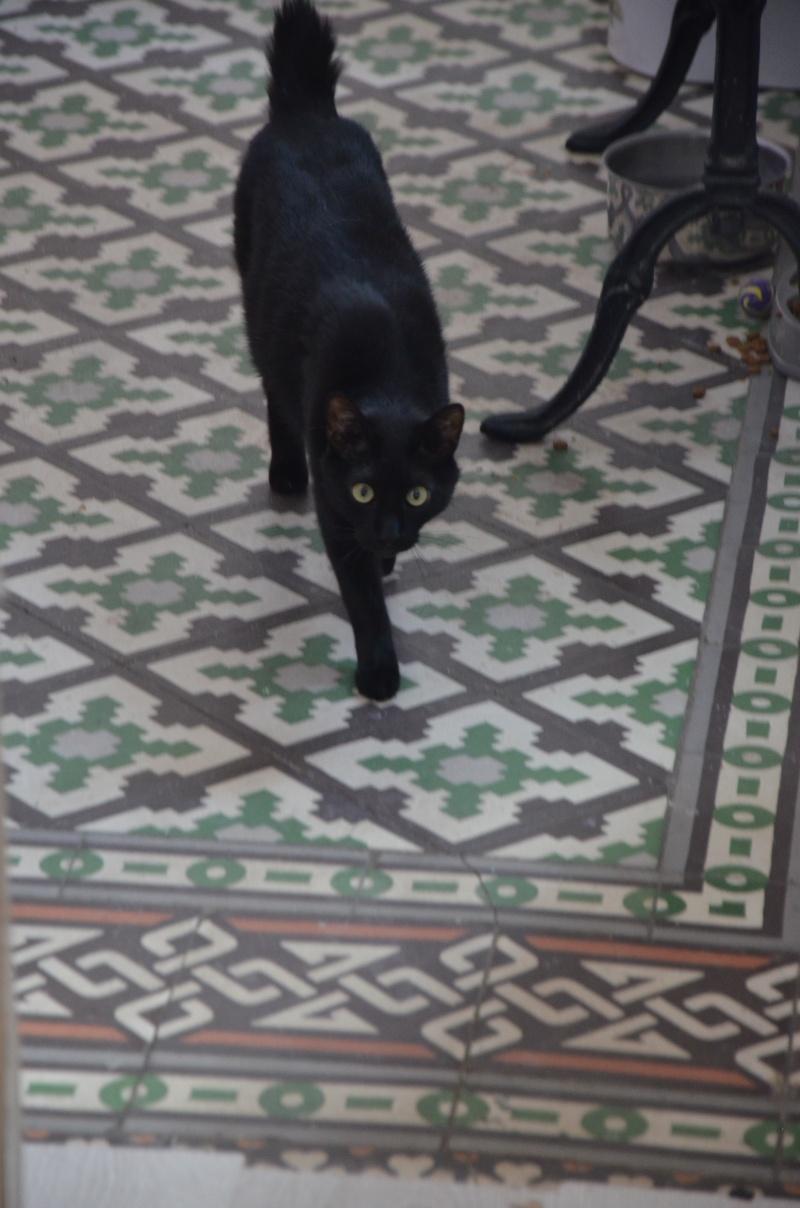 Gus, adorable mu00e2le noir pas banal, nu00e9 en septembre 2011