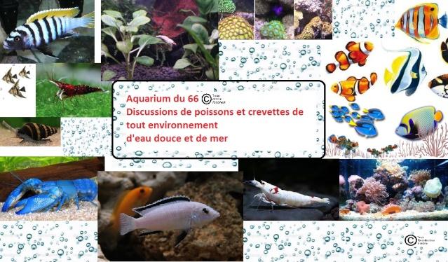 Aquarium du 66