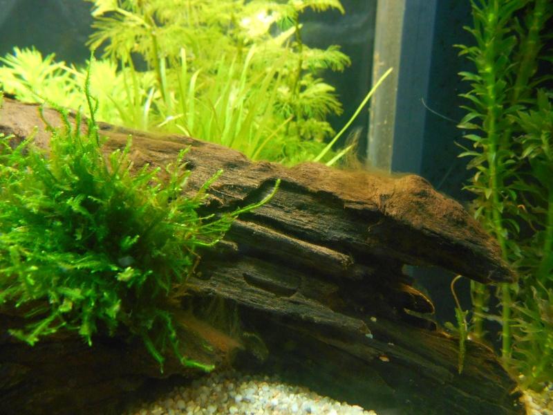 aide pour l installation d un aquarium 120l filtre sol plantes page 2
