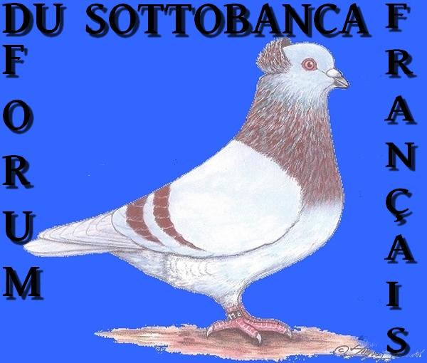LE SOTTOBANCA  FRANÇAIS.