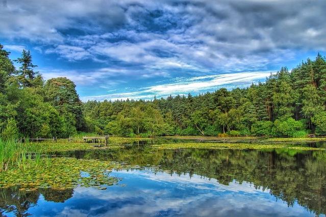 Captains Pond - Oxnead/Buxton/Lamas River Bure & Buxton Reservoir Angling Societies