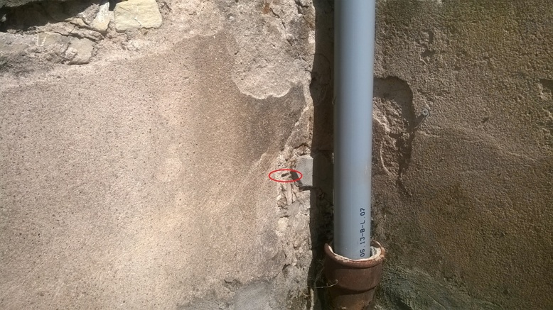 nid de guêpes dans mur en pierres
