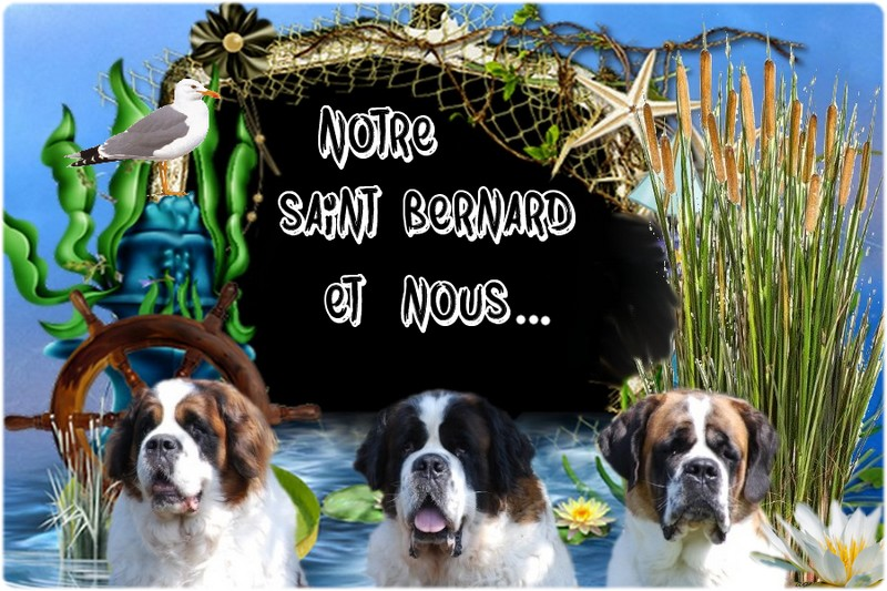Forum Notre saint Bernard & Nous