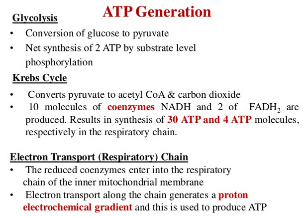 ATP: The Energy Currency for the Cell