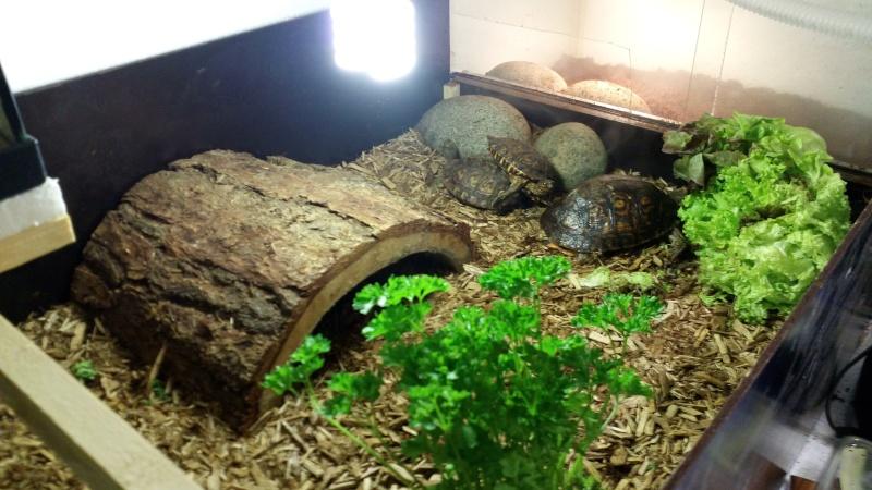 Aquarium pour tortue terre for Aquarium tortue aquatique