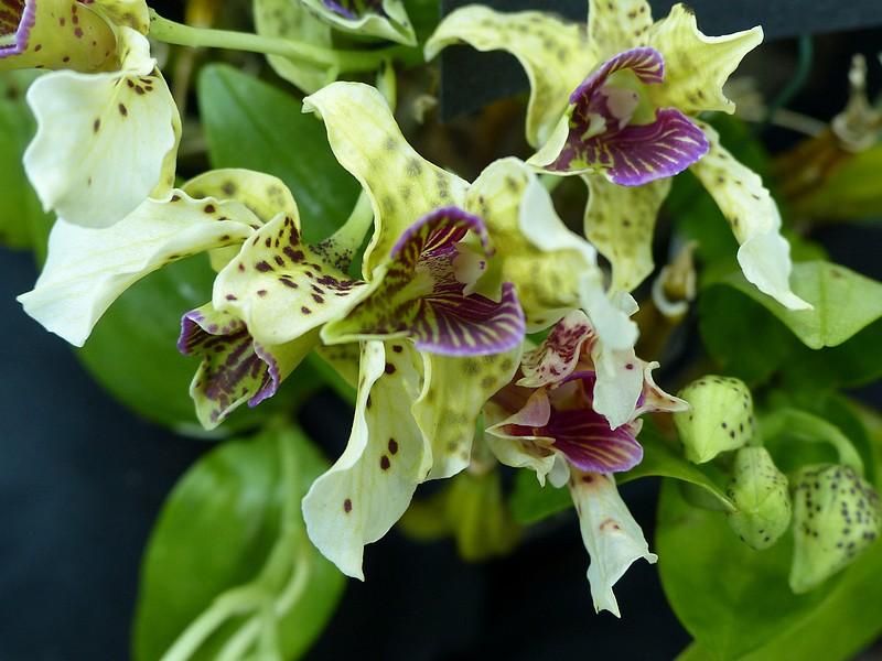 """Résultat de recherche d'images pour """"images gratuites d'orchidées"""""""