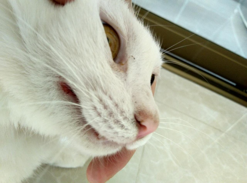 A maigri le chat le vomissement
