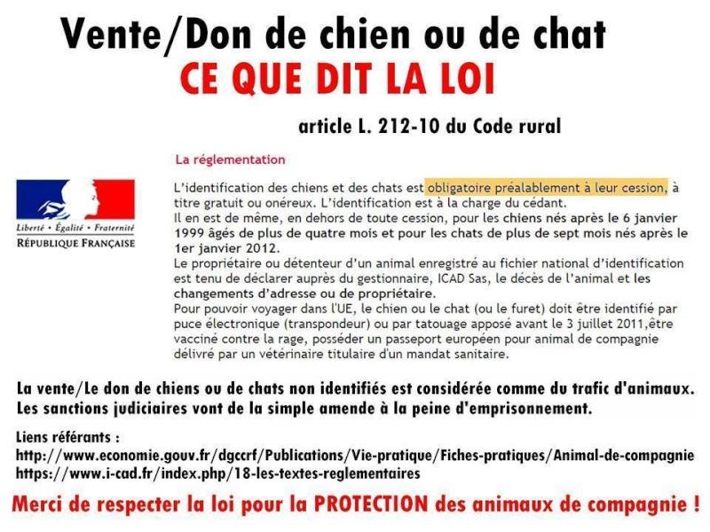 Loi vente don chien chat - Loi sur les chats et le voisinage ...