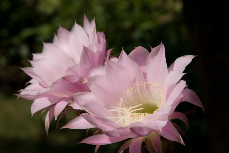 Fleur Amour Maternel Idee D Image De Fleur