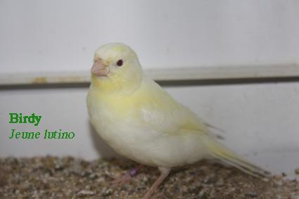 birdyl11.jpg