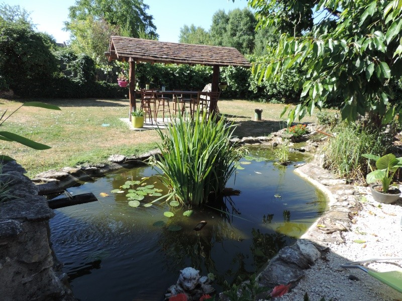 Forum aquajardin bassin koi jardin aquatique mare for Mare a poisson