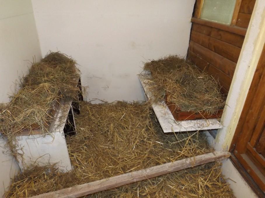 Mes poulettes et leur petit coin tranquille for Interieur poulailler