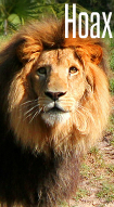 king11.jpg