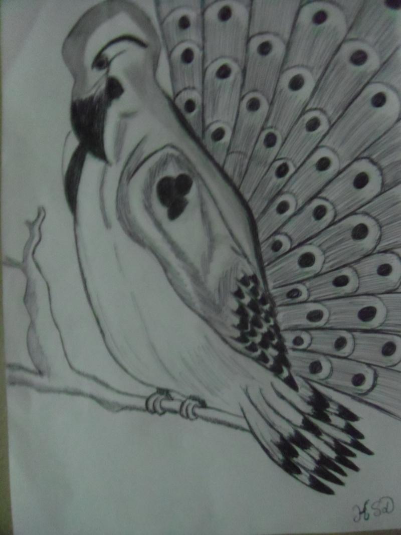 dessin Oiseau mystère