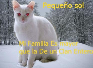 cats10.jpg