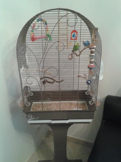 cde jeune couple de perruches ondules cage celjery. Black Bedroom Furniture Sets. Home Design Ideas